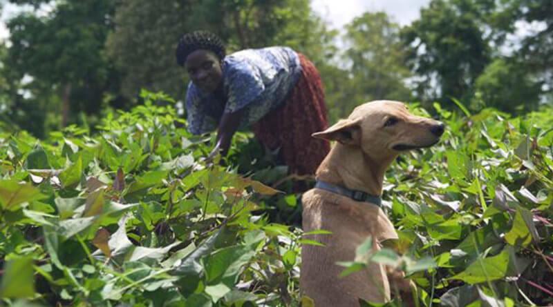Virtual SXSW Review: 'We Don't Deserve Dogs'